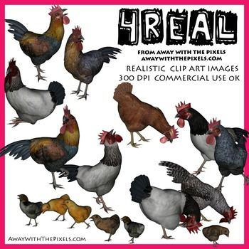 4 Real! Realistic Chicken, Rooster and Chick Images
