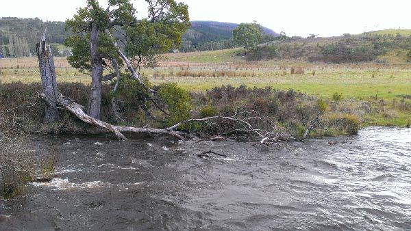 Looking for Platypus in the Tyenna River at The Possum Shed in Westerway. Article and photo for Think #Tasmania.