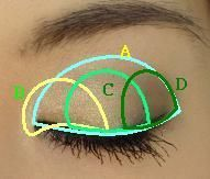 How to do a smokey eye. A is 3rd darkest, B is lightest, C is second lightest, D is darkest.
