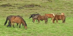 Horse transports in the Middle Ages - Wikipedia