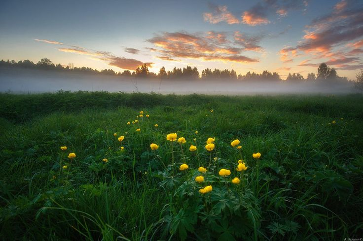 June foggy от Andrej Bazanov