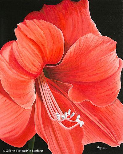 Dennis Magnusson, 'Amaryllis Lilies', 24'' x 30'' | Galerie d'art - Au P'tit Bonheur - Art Gallery