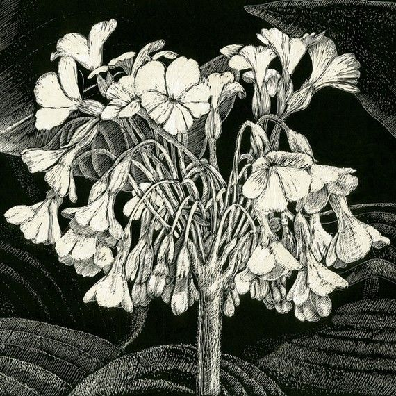 59 Best Black And White Flowers Images On Pinterest