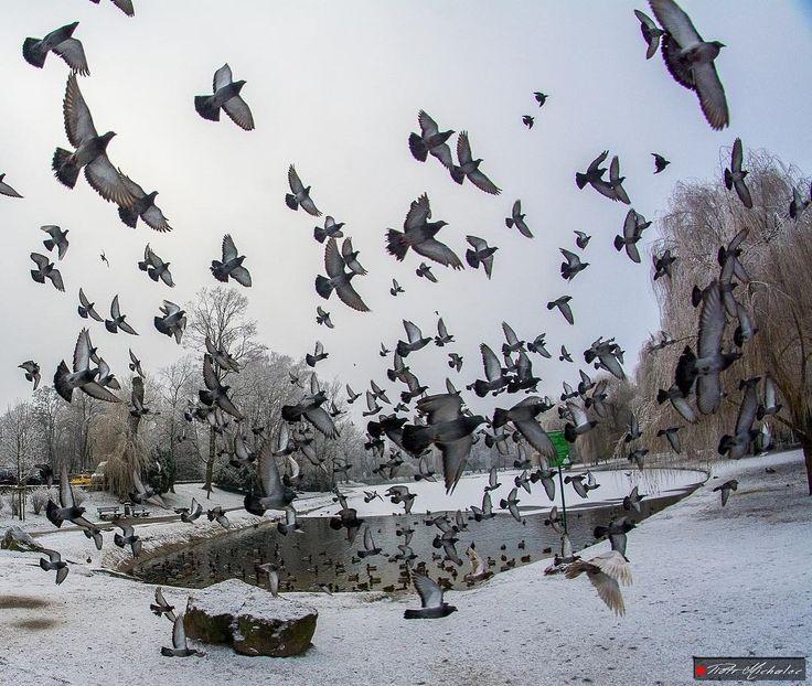 Park Miejski w Kielcach! @piotr_michalec #kielce #swietokrzyskie #radioemkielce #spacerpokielcach #świętokrzyskie #poland #igerskielce #kielcepieknesa #instakielce #winter #bird #birds #birdstagram  #landscape #landscape_lovers #landscapephotography #nikon #nikonphotography #snow #snowwhite