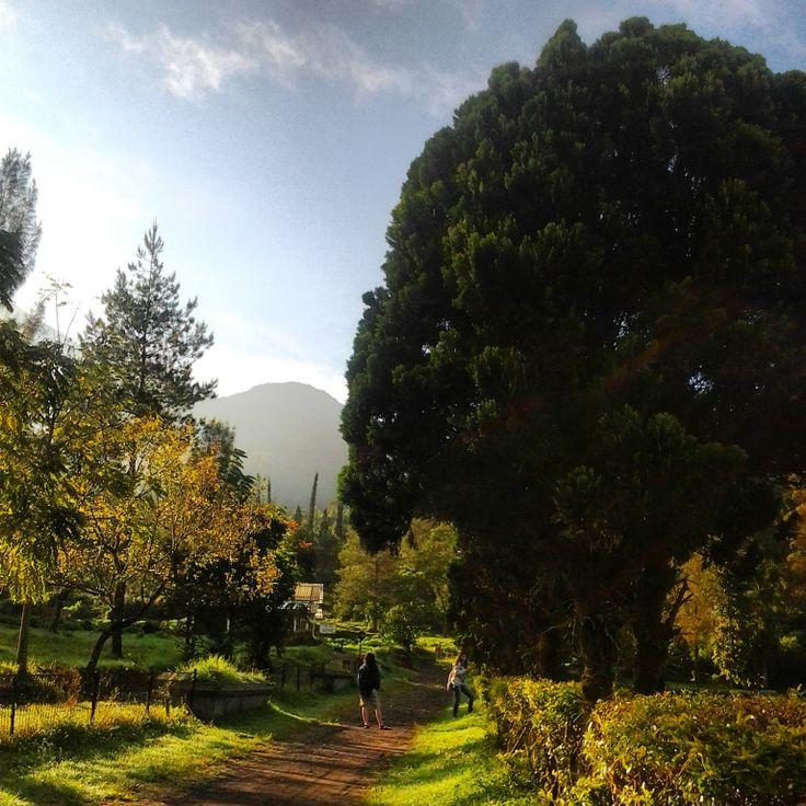Cangar Tahura R. Soeryo in Batu, Jawa Timur