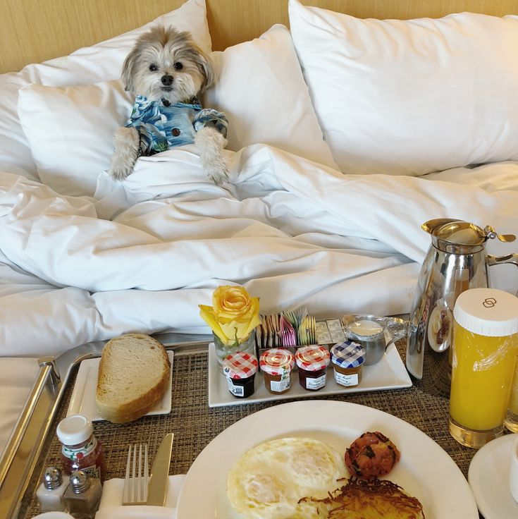 Brunch in bed at @sofitellosangeles 🍳 One of the many reasons why we love traveling to California is because of how #dogfriendly they are — and @sofitellosangeles takes it to the next level. Thomas was greeted with treats in the lobby, given his own bed and food bowls. The #VIPpet package is no additional cost when you stay with them and the hotel is gorgeous. Take note when traveling to #losangeles with your #furbaby. 🐶 #petfriendlyhotel #sofitel #beverlyhills #dogthreads #saturdaybrunch