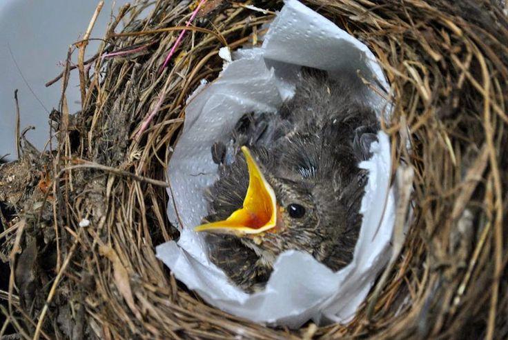 """""""Δράσεις"""" Οικολογία και Περιβάλλον: Το δικαίωμα στην ζωή, των άγριων ζώων (φωτογραφίες..."""