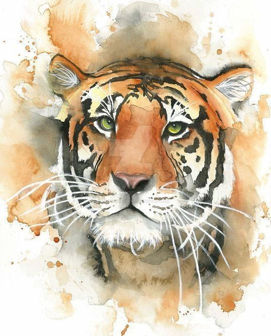 Картинки рисунки тигра акварелью