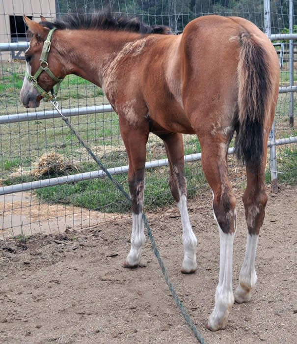 241 Best Images About Horse Color Galore: Foal Coats On