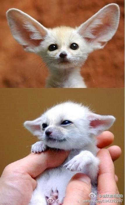 Baby #Fox #cute baby Animals #Baby Animals| http://best-cute-baby-animals-gallery.blogspot.com