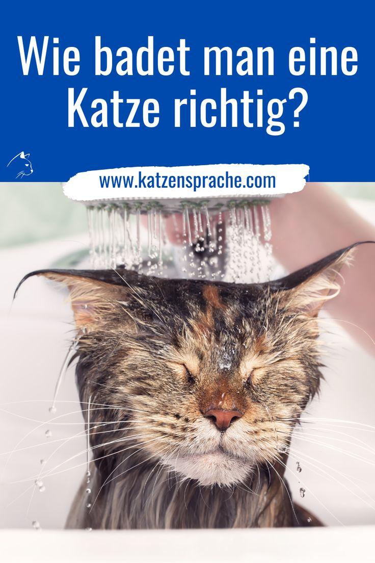 Wie badet man eine Katze richtig? in 2021 | Katzen, Katzen