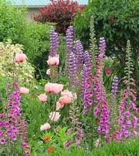 pretty mix of flowers for a border