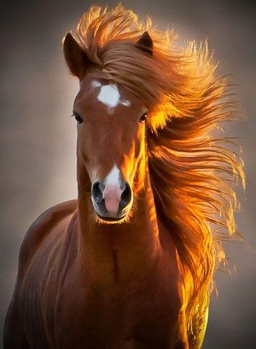 Les cheveux dans le vent..... La crinière dans le vent.