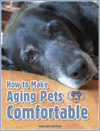 Even the smallest of changes can make a world of difference in the life of your older pets. Here are a few things to make your cat or dog as happy and relaxed as possible. [Rent.com Blog] #pets #dogs #cats