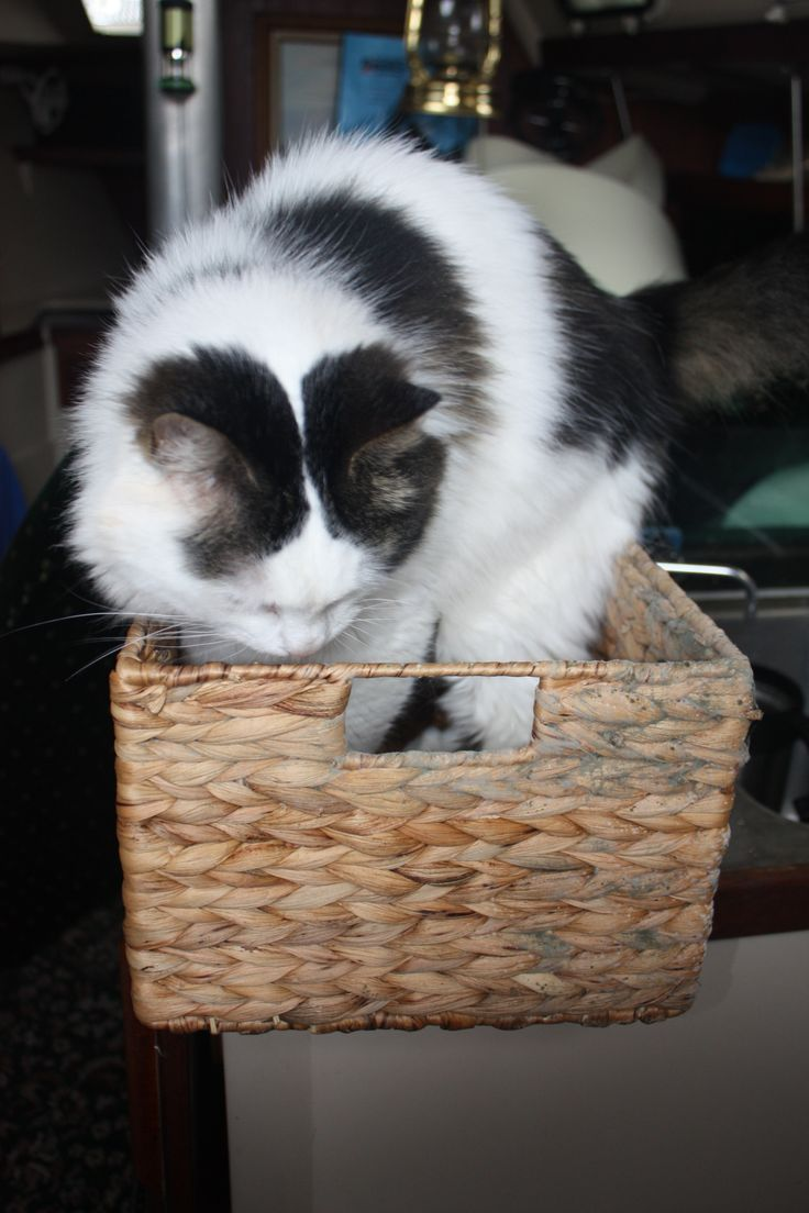 Celia, inspecting the mold on our storage baskets.