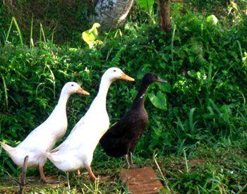 The Organic Farm Bali - Contact