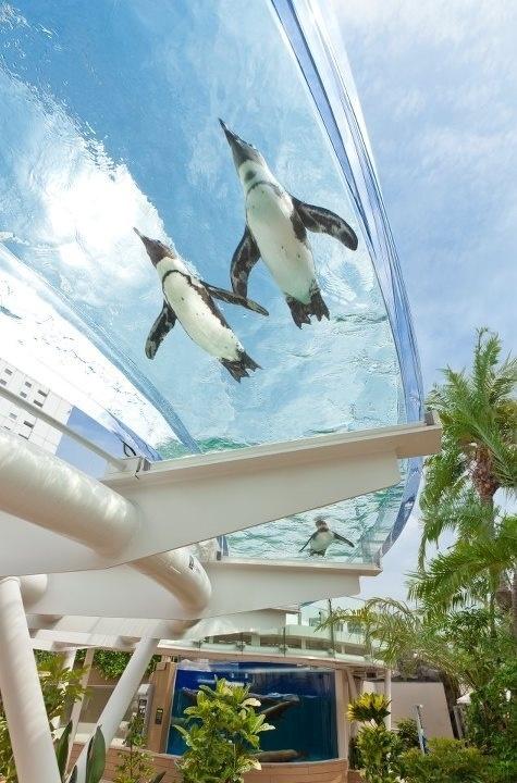 池袋サンシャイン水族館で夏限定でやる空飛ぶペンギン企画。これは行きたい!