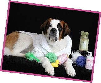 31 best grooming images on pinterest doggies pets and dog cat for those lucky pet owners in northwest indiana we offer grooming for dogs of all shapes solutioingenieria Choice Image