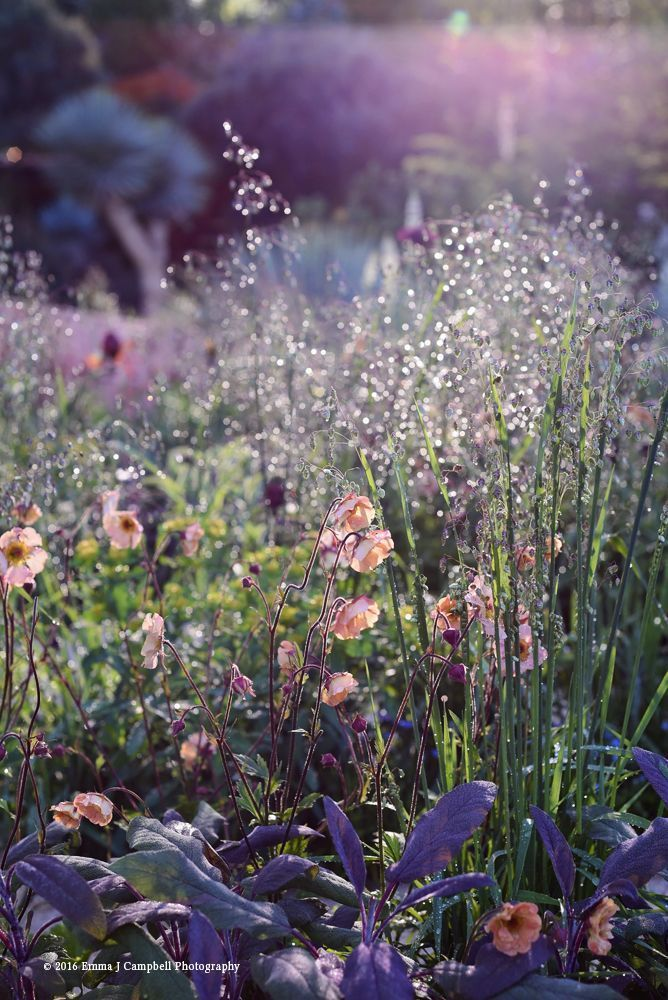 The Winton Beauty Of Mathematics Garden Designed By Nick Bailey We Are Want To Bailey In 2020 Graser Im Garten Bepflanzung Garten