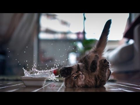 ▶ Funny Kittens Compilation 2014 - YouTube