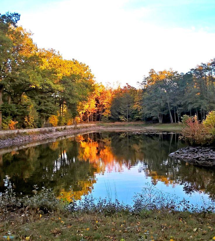 Park, Lomnice nad Popelkou