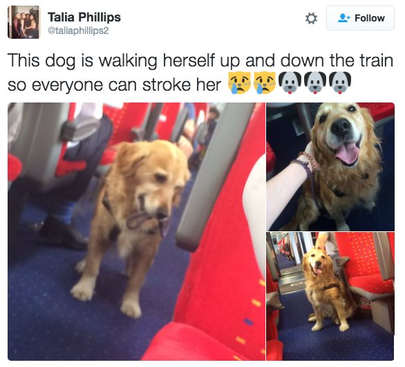 This dog taking matters into its own hands:  Sounds like something my dog would do!!!