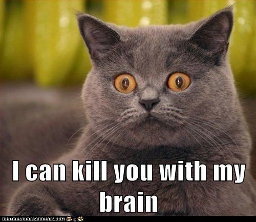 mental powers: Lol Cat, Funny Cat, Effugere Lolcat, Rivers Tam, Crazy Cat, Funny Stuff, Funny Animal, Cat Faces, Crazy Eye