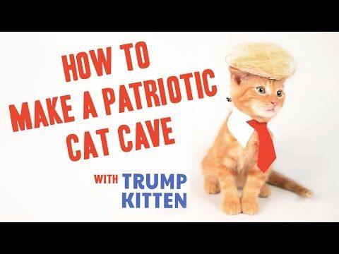 How To Make a Patriotic Cat Cave - YouTube