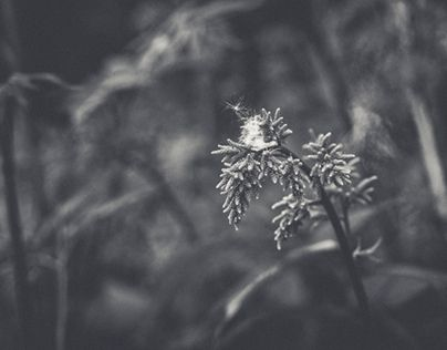 """Check out new work on my @Behance portfolio: """"Just Monochrome"""" http://be.net/gallery/38091515/Just-Monochrome"""