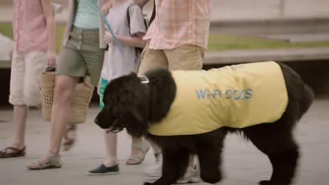 José's Wi-Fi Dogs