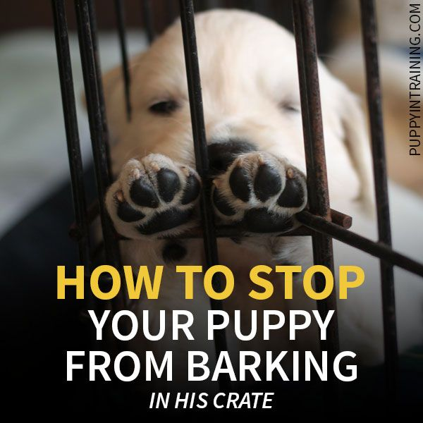 How To Stop A Puppy From Barking In His Crate At Night Dog Training Training Your Dog Puppy Training