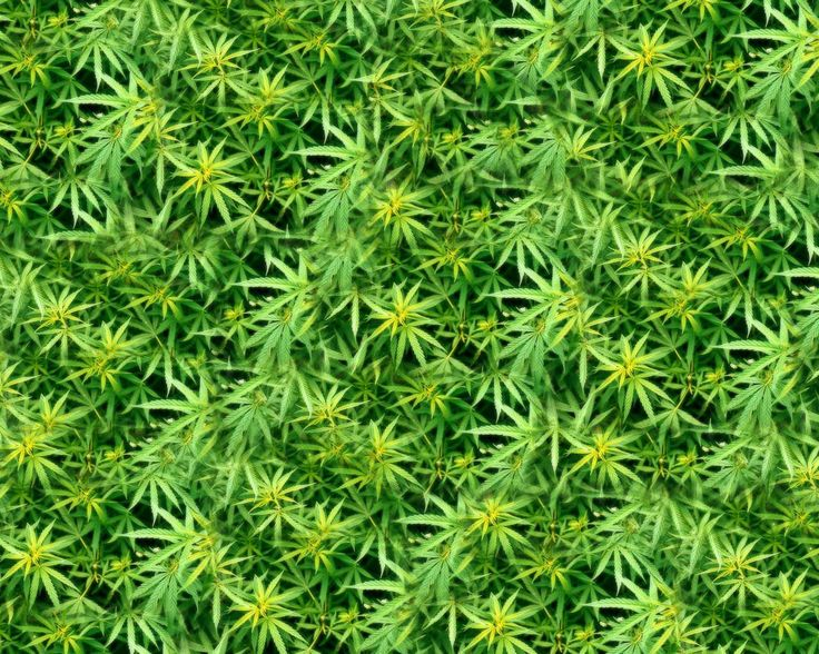 hi weed related backgrounds - photo #21