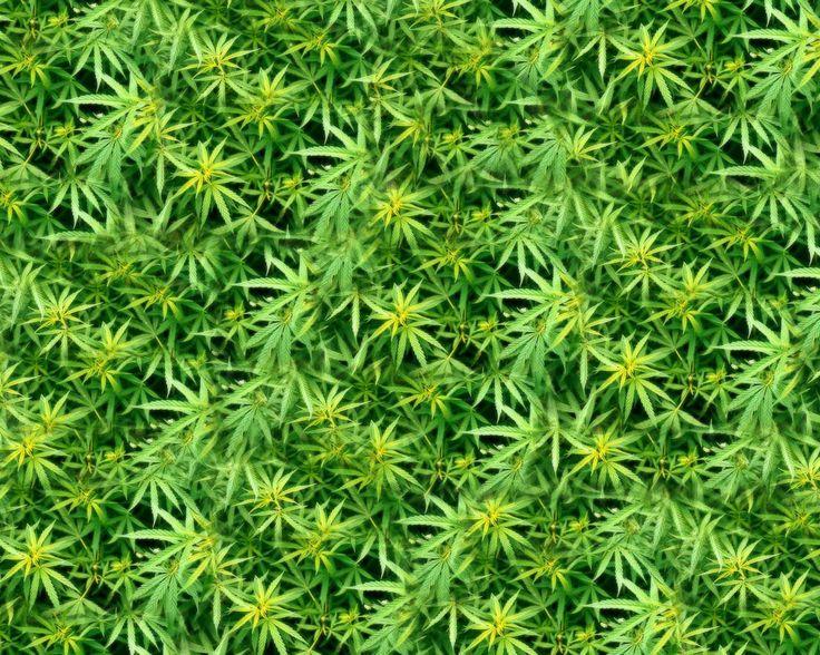 Sexy cannabis wallpaper — pic 15