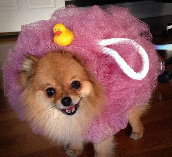 15 Clever Dog Costumes Just Beggin' For Attention This Howloween