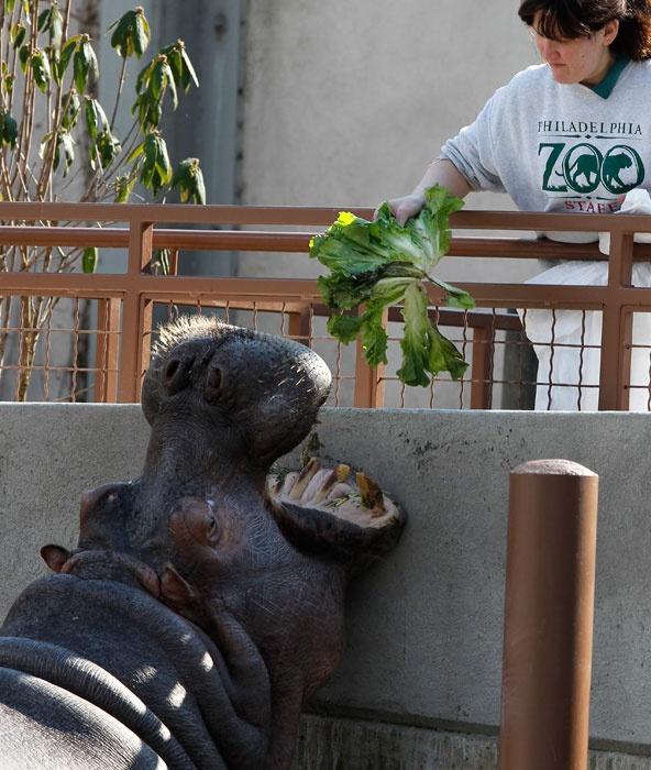 Delish...: Hungry Hippo