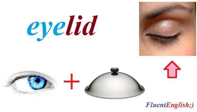 eye + lid = eyelid! (веко)