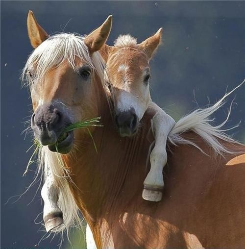 .Horseback Riding, Mothers Love, Baby Horses, Sweets, So Cute, Ponies, Horse Love, Baby Animals, Cute Babies