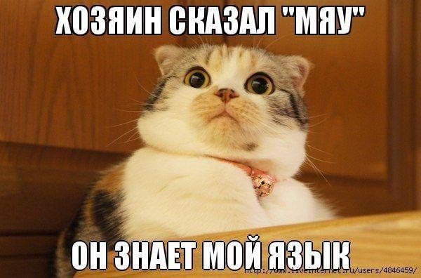 Цитата-Мемы,комиксы,карикатуры-3...ПРО КОТОВ. Обсуждение на ...