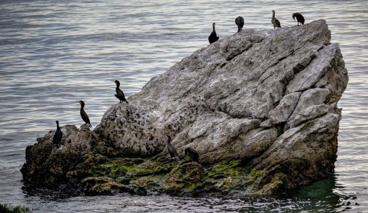 Birds on a rock near Trieste.