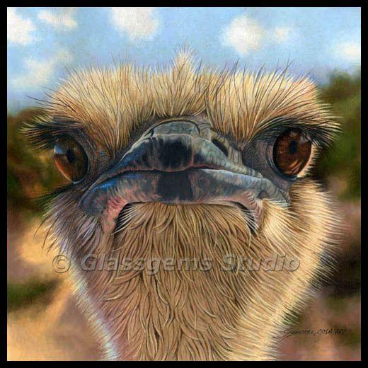 Gemma is one of my favorite wildlife artsits! Ostrich, Colored Pencil Art from Gemma Gylling, http://www.glassgems.net