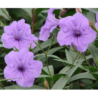 45 Best South Texas Plants Ornamental Plants For