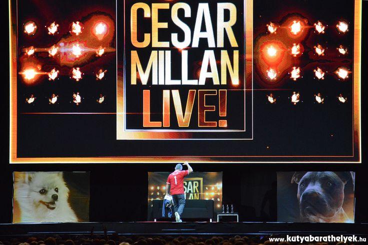 Cesar Millan Live Budapest - A kutyadoki magyar címeres mezben  #kutya #dog #cesarmillanlive #kutyabaráthelyek