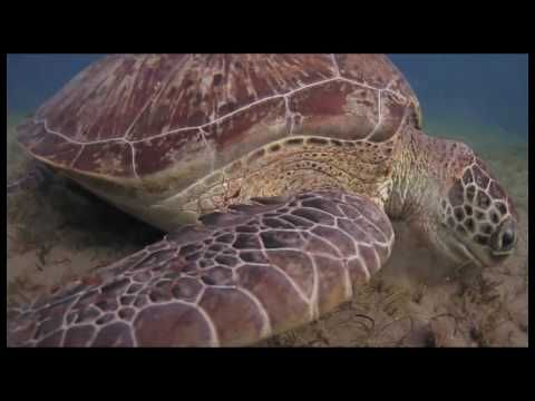 Turtle's Day gives the opportunity to recognize the appearance of a ancient animal that is around us today, either on lands, walking in our gardens , on sea sides or swimming deep down the seas.  Turtle is living for approximately 150 years and is being on earth for over 150 million years!!!