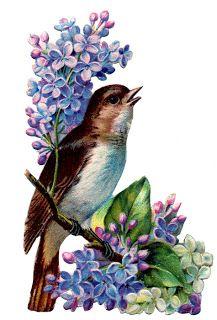 Коллекция картинок: Птички_ Французский винтаж