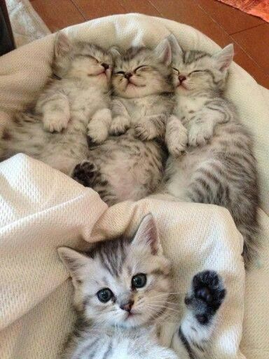3 cute little kittens and a.....uhhh....hello!!