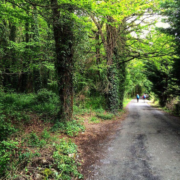 @QuinoMaroto    #caminodesantiago en #Melide #Galicia #jacobsweg #pilgrim #pilgrim