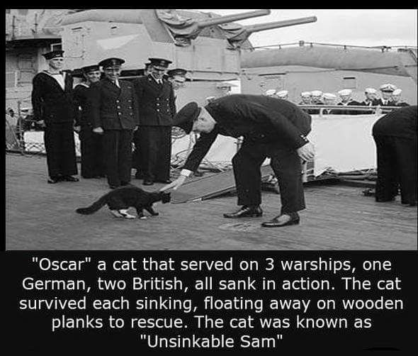 """Unsinkable Sam"" served on 3 ships = 1 German and 2 British. All 3 ships sunk during battle and  all 3 times Oscar the cat survived, thus being called ""Unsinkable Sam""."