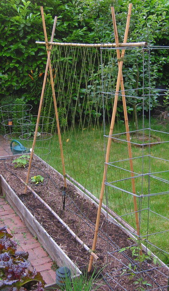 C S Bamboo Bean Trellis Vertical Vegetable Gardens Bean Trellis Vegetable Garden Design