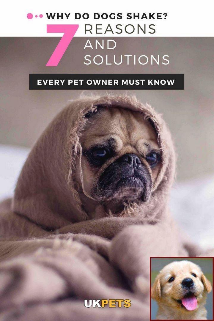 House Training A Morkie Puppy And Dog Trainer Courses Uk Dog Shaking Funny Dog Memes Dog Behavior Problems