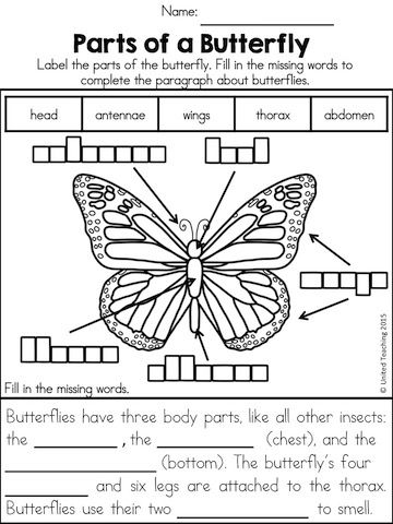 Parts of a Butterfly - Label the butterfly and complete the sentences using the words >> Part of the Insects No Prep Activities packet